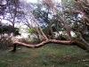 21-Bosque-ombues