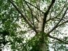 10 arbol en Palenque