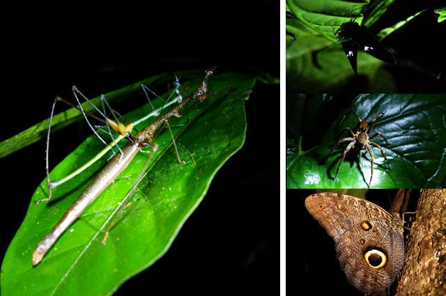 27.Insectos-amazonas