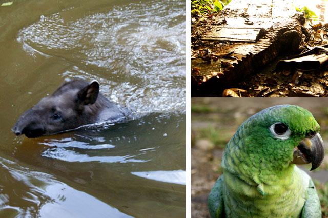 31.Fauna-amazonia