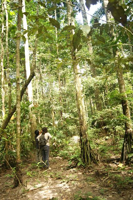 17-Madidi-Jungle-Lodge