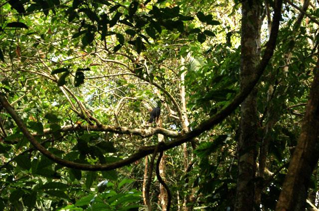 25-Madidi-Jungle-Lodge