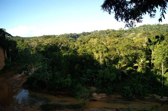 28-Parque-N-Madidi
