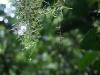 17.Bosque-tropical