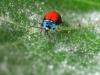 17.Insecto-galactico