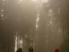 26.Caminando-x-bosque-de-niebla-en-valle-Cocora