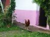 03 Calles de Suchitoto