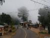 03 Neblina en San Jose del Pacifico