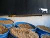 Sobrante de malta que se vende para alimento de ganado