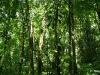 07b. el bosque