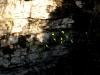 09 Pericos volando en circulo