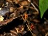 11 Insectos galacticos