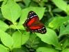 22 Mariposas de colores