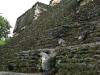 06 Pavo salvaje en Tikal