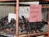 17 Mercado de Tlacolula-pollos