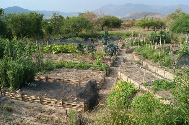 06. Huerto organico biointensivo
