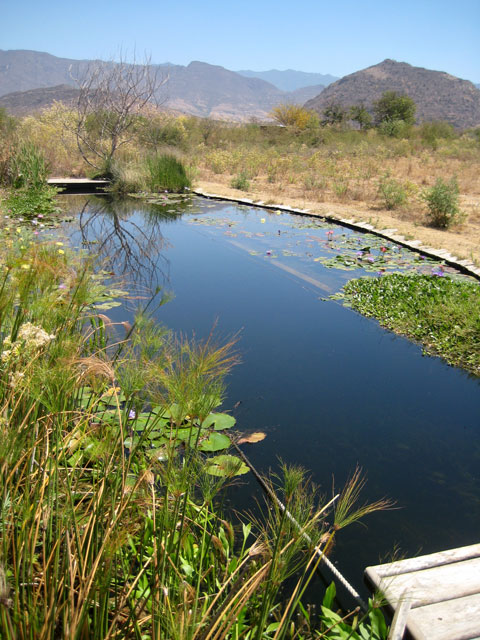 07. Estanque con plantas para nadar