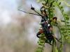 25. Insectos locales