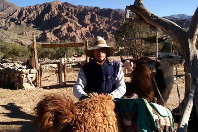 07-caravana-llamas-tilcara