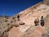 11-caravana-llamas-tilcara