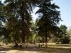 Entrada al parque de olivos