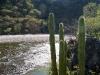 Cactus junto al río