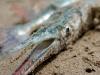 10 Baracuda muerta Wawabar