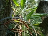 12 Las Pozas de Edward James