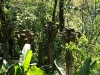 15 Las Pozas de Edward James