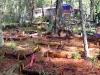 Terrazas de cultivo en el Bosque Village